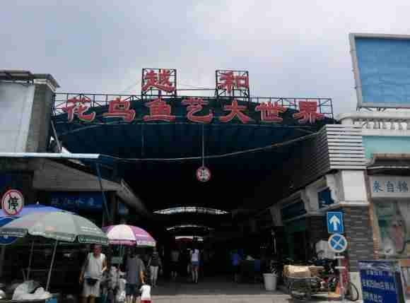 "Chợ sinh vật cảnh ""Hua Di Wan"""
